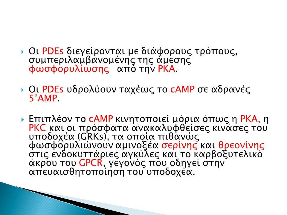  Οι PDEs διεγείρονται με διάφορους τρόπους, συμπεριλαμβανομένης της άμεσης φωσφορυλίωσης από την PKA.