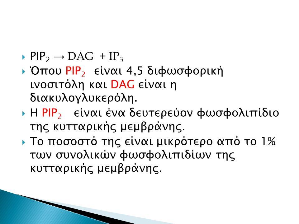  PIP 2 → DAG + IP 3  Όπου PIP 2 είναι 4,5 διφωσφορική ινοσιτόλη και DAG είναι η διακυλογλυκερόλη.