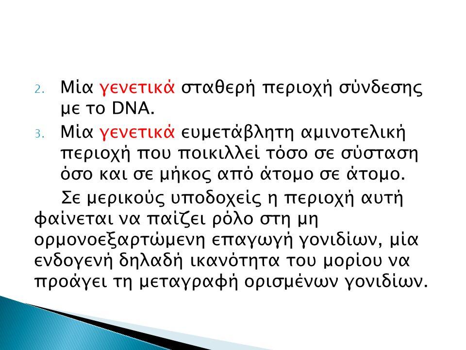 2. Μία γενετικά σταθερή περιοχή σύνδεσης με το DNA.
