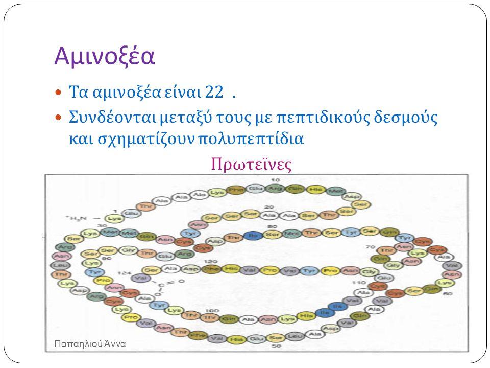 Αμινοξέα Τα αμινοξέα είναι 22. Συνδέονται μεταξύ τους με πεπτιδικούς δεσμούς και σχηματίζουν πολυπεπτίδια Πρωτεϊνες Παπαηλιού Άννα