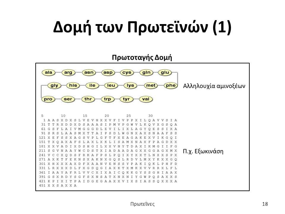Δομή των Πρωτεϊνών (1) Πρωτεΐνες18
