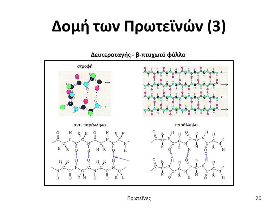 Δομή των Πρωτεϊνών (3) Πρωτεΐνες20