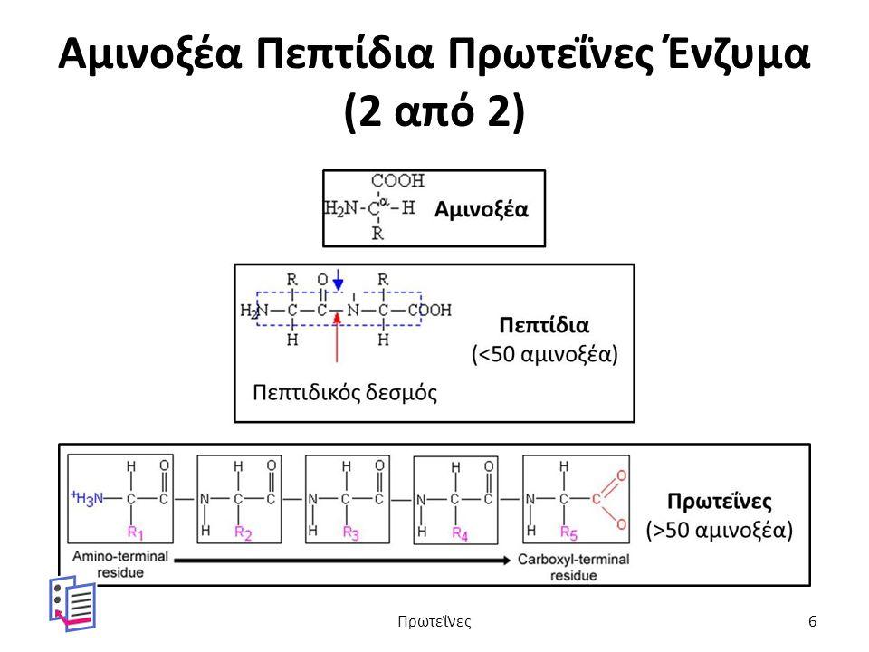 Αμινοξέα Πεπτίδια Πρωτεΐνες Ένζυμα (2 από 2) Πρωτεΐνες6
