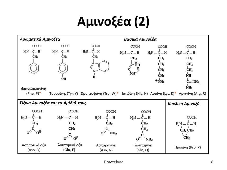 Αμινοξέα (2) Πρωτεΐνες8