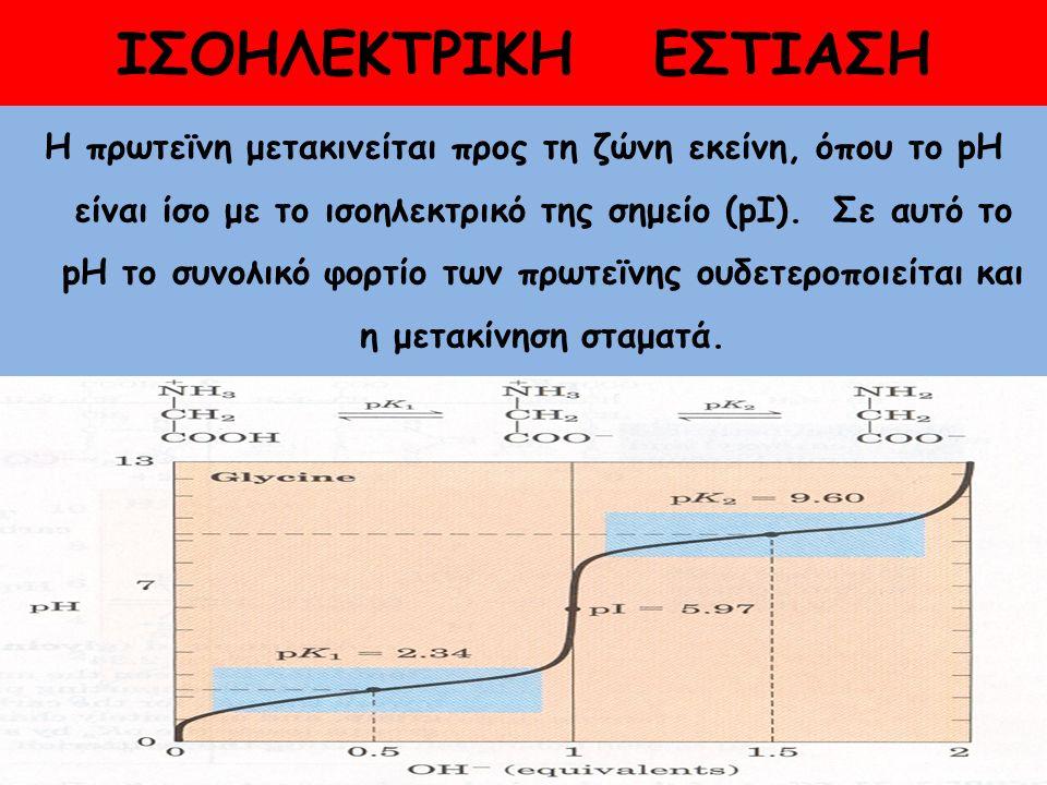 ΙΣΟΗΛΕΚΤΡΙΚΗ ΕΣΤΙΑΣΗ Η πρωτεϊνη μετακινείται προς τη ζώνη εκείνη, όπου το pH είναι ίσο με το ισοηλεκτρικό της σημείο (pΙ).