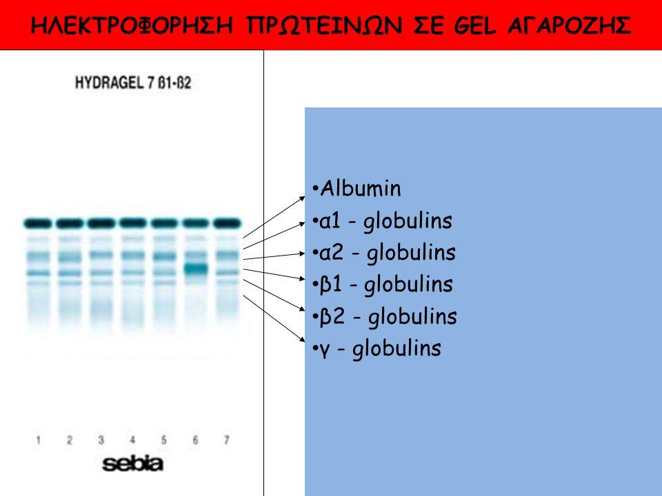 HΛΕΚΤΡΟΦΟΡΗΣΗ ΠΡΩΤΕΙΝΩΝ ΣΕ GEL ΑΓΑΡΟΖΗΣ Albumin α1 - globulins α2 - globulins β1 - globulins β2 - globulins γ - globulins