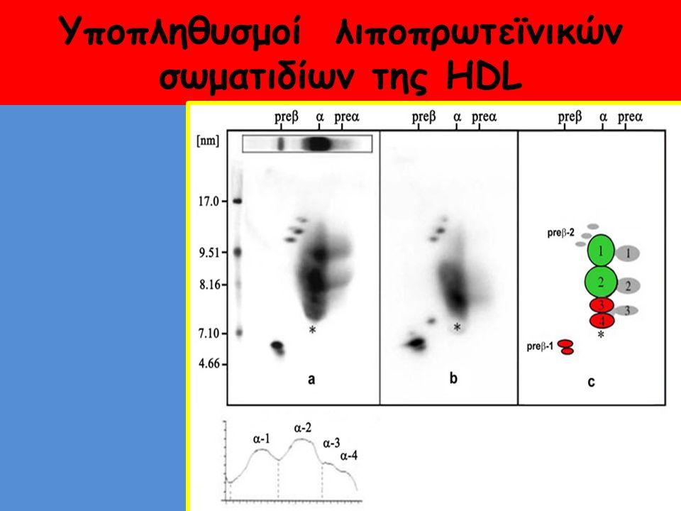 Υποπληθυσμοί λιποπρωτεϊνικών σωματιδίων της HDL