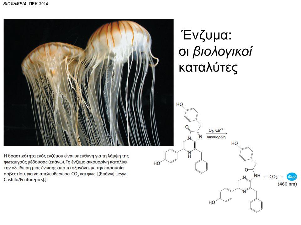 ΒΙΟΧΗΜΕΙΑ, ΠΕΚ 2014 Ένζυμα: οι βιολογικοί καταλύτες