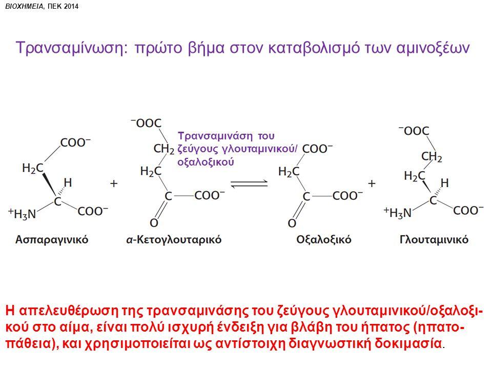 ΒΙΟΧΗΜΕΙΑ, ΠΕΚ 2014 Τρανσαμίνωση: πρώτο βήμα στον καταβολισμό των αμινοξέων Τρανσαμινάση του ζεύγους γλουταμινικού/ οξαλοξικού Η απελευθέρωση της τρανσαμινάσης του ζεύγους γλουταμινικού/οξαλοξι- κού στο αίμα, είναι πολύ ισχυρή ένδειξη για βλάβη του ήπατος (ηπατο- πάθεια), και χρησιμοποιείται ως αντίστοιχη διαγνωστική δοκιμασία.