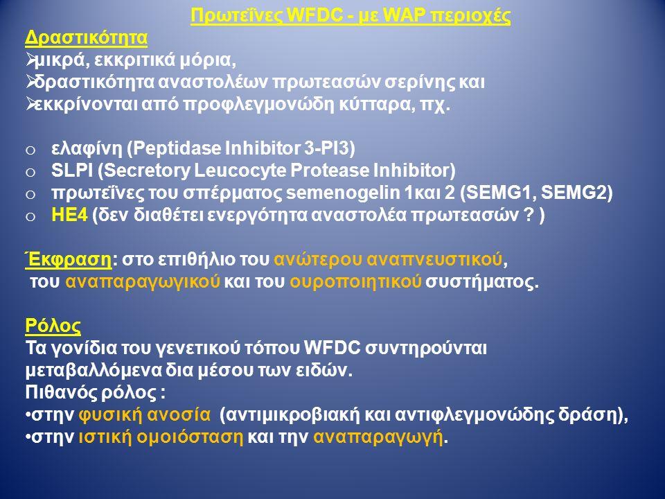 Πρωτεΐνες WFDC - με WAP περιοχές Δραστικότητα  μικρά, εκκριτικά μόρια,  δραστικότητα αναστολέων πρωτεασών σερίνης και  εκκρίνονται από προφλεγμονώδη κύτταρα, πχ.