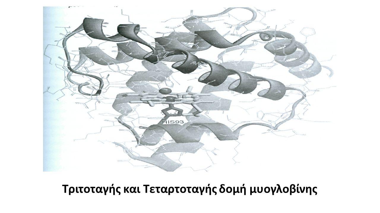 Τριτοταγής και Τεταρτοταγής δομή μυογλοβίνης