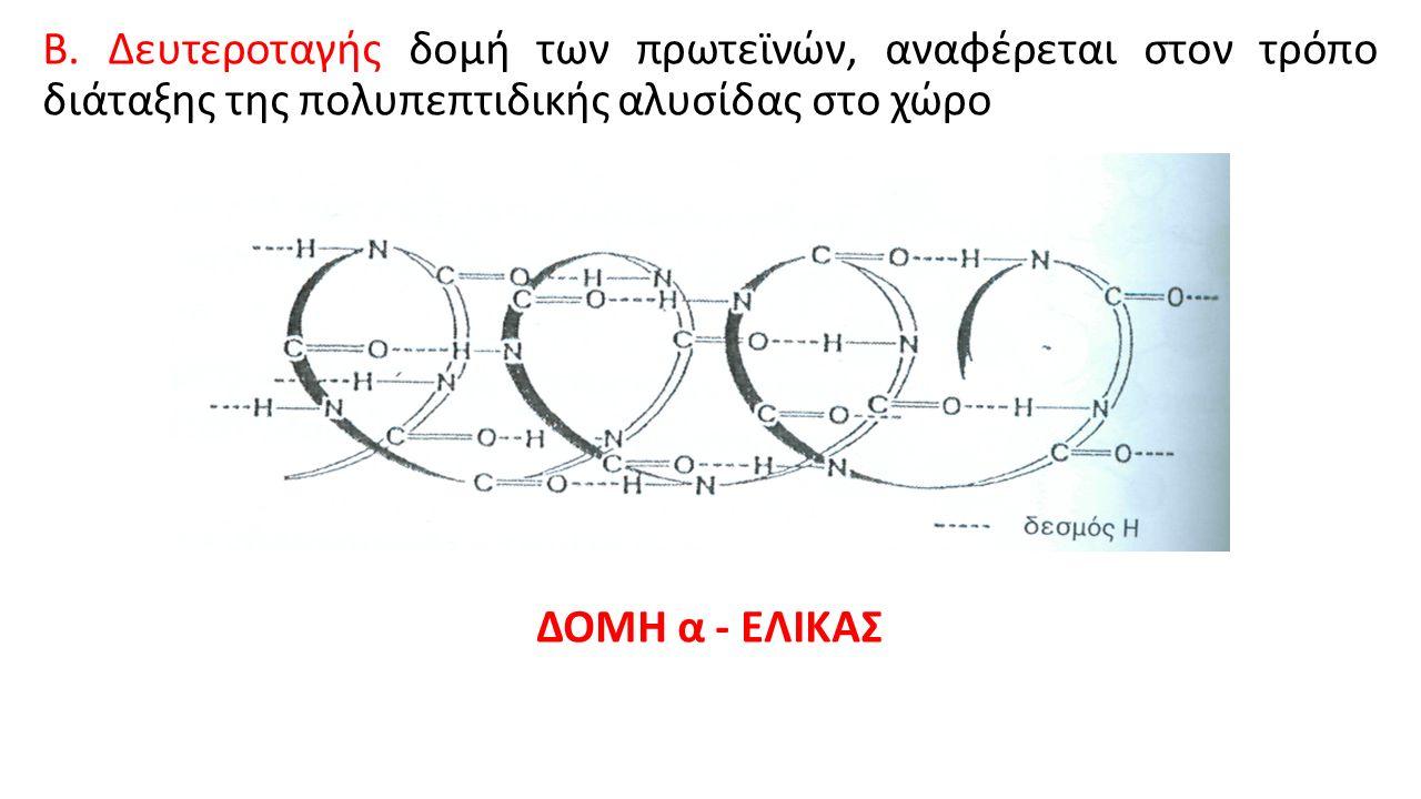 Β. Δευτεροταγής δομή των πρωτεϊνών, αναφέρεται στον τρόπο διάταξης της πολυπεπτιδικής αλυσίδας στο χώρο ΔΟΜΗ α - ΕΛΙΚΑΣ