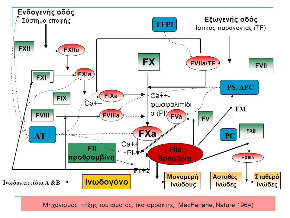 FXII FXIIa FXIa FIXa FIX FVIIIaFVIII FXa FIIa θρομβίνη FII προθρομβίνη Ινωδογόνο Μονομερή Ινώδους Ασταθές Ινώδες Σταθερό Ινώδες FXIIIa FXIII FX FVIIa/TF FVII Μηχανισμός πήξης του αίματος, (καταρράκτης, MacFarlane, Nature 1964) FXI Ενδογενής οδός Σύστημα επαφής Εξωγενής οδός Ιστικός παράγοντας (TF) FVa FV Ca++- φωσφολιπίδι α (Pl) Ca++ Pl Ca++ F1+2 Ινωδοπεπτίδια Α &Β ΑΤ PS, APC PC TM TFPI