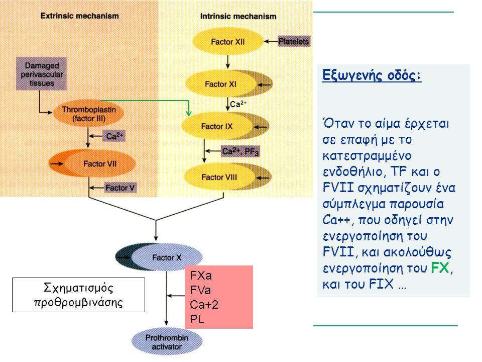 Εξωγενής οδός: Όταν το αίμα έρχεται σε επαφή με το κατεστραμμένο ενδοθήλιο, TF και ο FVII σχηματίζουν ένα σύμπλεγμα παρουσία Ca++, που οδηγεί στην ενεργοποίηση του FVII, και ακολούθως ενεργοποίηση του FX, και του FIX … Σχηματισμός προθρομβινάσης Ca 2+ FXa FVa Ca+2 PL