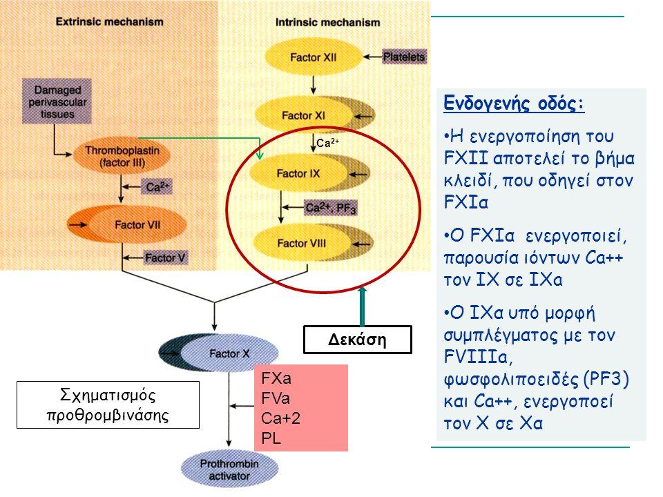 Ενδογενής οδός: Η ενεργοποίηση του FXII αποτελεί το βήμα κλειδί, που οδηγεί στον FXIα Ο FXIα ενεργοποιεί, παρουσία ιόντων Ca++ τον IX σε IΧa Ο ΙΧα υπό μορφή συμπλέγματος με τον FVIIIa, φωσφολιποειδές (PF3) και Ca++, ενεργοποεί τον Χ σε Χα Σχηματισμός προθρομβινάσης Ca 2+ FXa FVa Ca+2 PL Δεκάση
