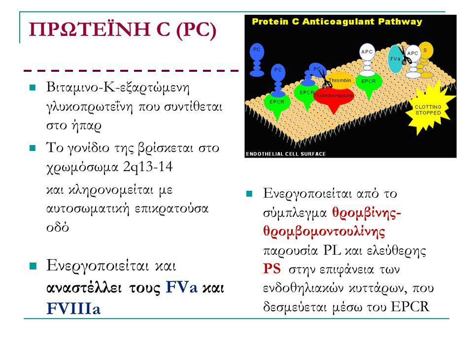 ΠΡΩΤΕΪΝΗ C (PC) Bιταμινο-Κ-εξαρτώμενη γλυκοπρωτεΐνη που συντίθεται στο ήπαρ Το γονίδιο της βρίσκεται στο χρωμόσωμα 2q13-14 και κληρονομείται με αυτοσωματική επικρατούσα οδό Ενεργοποιείται και αναστέλλει τους FVa και FVIIIa Ενεργοποιείται από το σύμπλεγμα θρομβίνης- θρομβομοντουλίνης παρουσία PL και ελεύθερης PS στην επιφάνεια των ενδοθηλιακών κυττάρων, που δεσμεύεται μέσω του ΕPCR