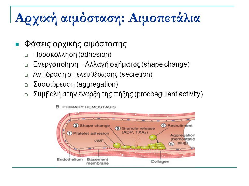 Αρχική αιμόσταση: Αιμοπετάλια Φάσεις αρχικής αιμόστασης  Προσκόλληση (adhesion)  Ενεργοποίηση - Αλλαγή σχήματος (shape change)  Αντίδραση απελευθέρωσης (secretion)  Συσσώρευση (aggregation)  Συμβολή στην έναρξη της πήξης (procoagulant activity)