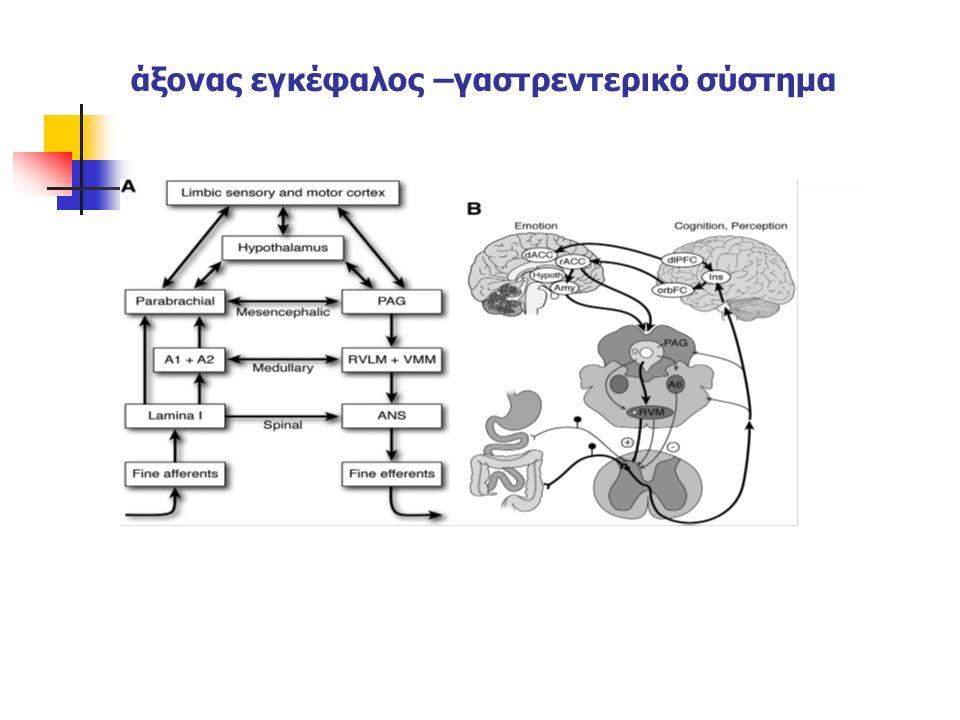άξονας εγκέφαλος –γαστρεντερικό σύστημα