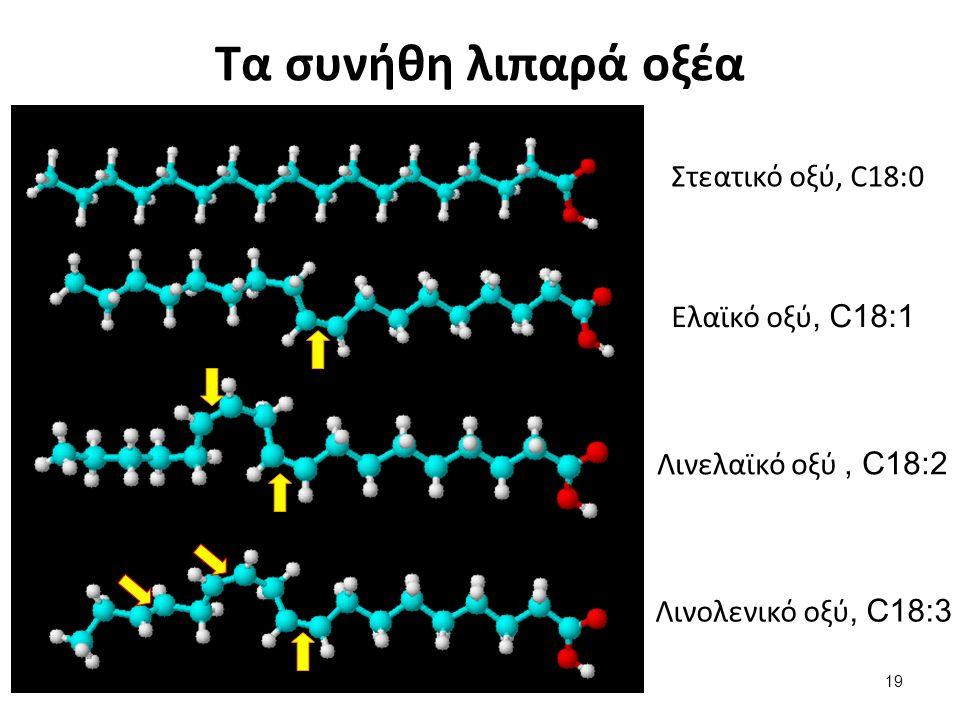 Τα συνήθη λιπαρά οξέα Στεατικό οξύ, C18:0 Ελαϊκό οξύ, C18:1 Λινελαϊκό οξύ, C18:2 Λινολενικό οξύ, C18:3 19