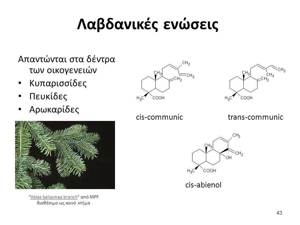 Λαβδανικές ενώσεις Απαντώνται στα δέντρα των οικογενειών Κυπαρισσίδες Πευκίδες Αρωκαρίδες cis-communictrans-communic cis-abienol Abies balsamea branch από MPF διαθέσιμο ως κοινό κτήμαAbies balsamea branch 43