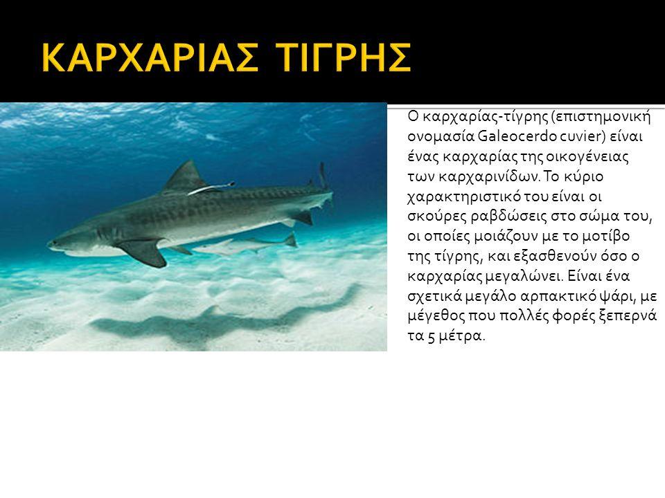 Ο καρχαρίας-τίγρης (επιστημονική ονομασία Galeocerdo cuvier) είναι ένας καρχαρίας της οικογένειας των καρχαρινίδων.