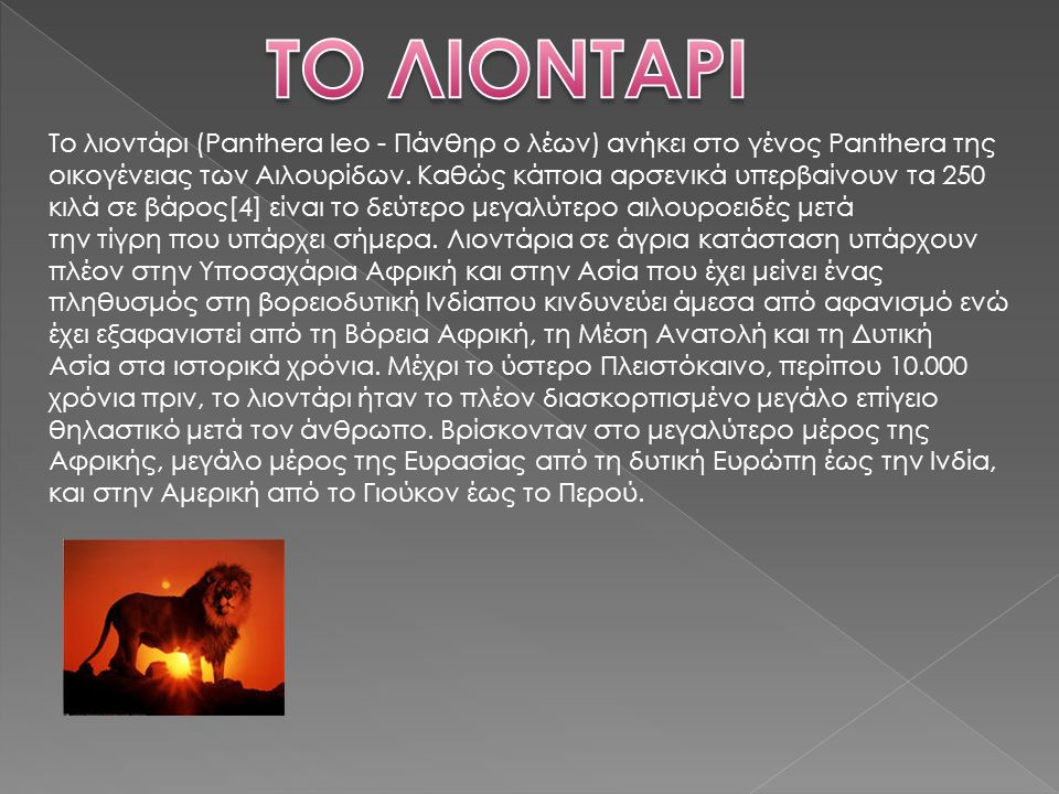 Το λιοντάρι (Panthera leo - Πάνθηρ ο λέων) ανήκει στο γένος Panthera της οικογένειας των Αιλουρίδων.