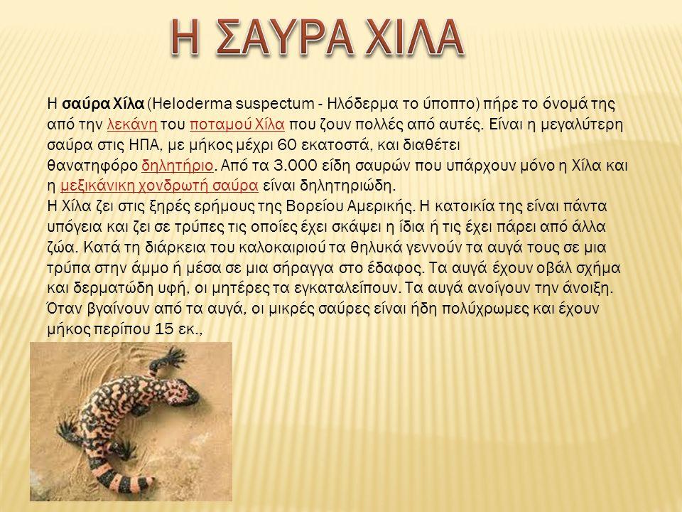 Η σαύρα Χίλα (Heloderma suspectum - Ηλόδερμα το ύποπτο) πήρε το όνομά της από την λεκάνη του ποταμού Χίλα που ζουν πολλές από αυτές.