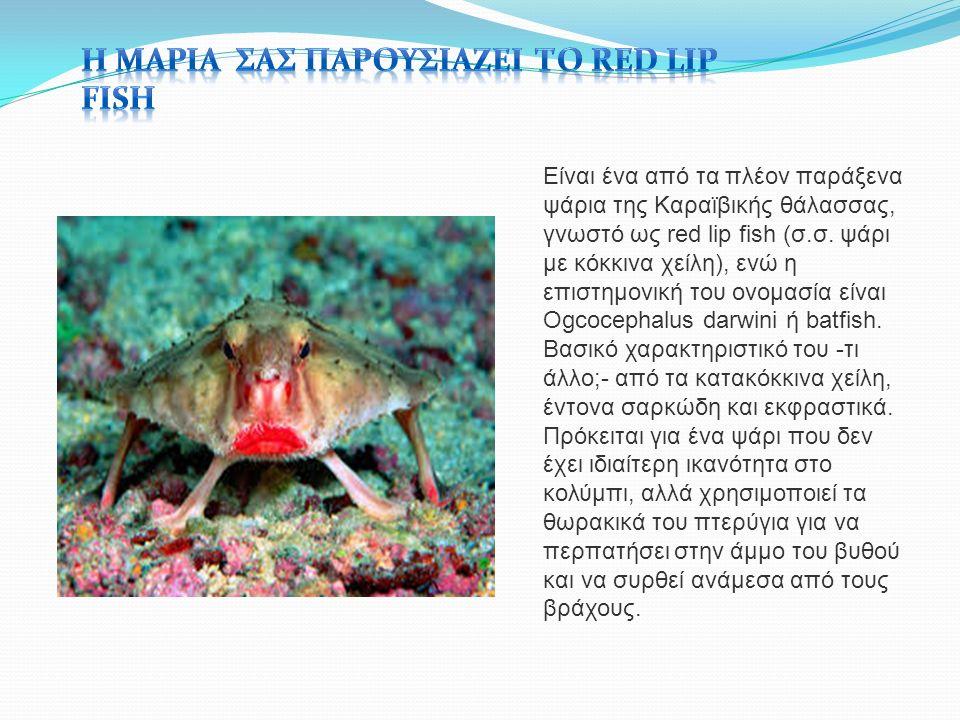 Είναι ένα από τα πλέον παράξενα ψάρια της Καραϊβικής θάλασσας, γνωστό ως red lip fish (σ.σ.