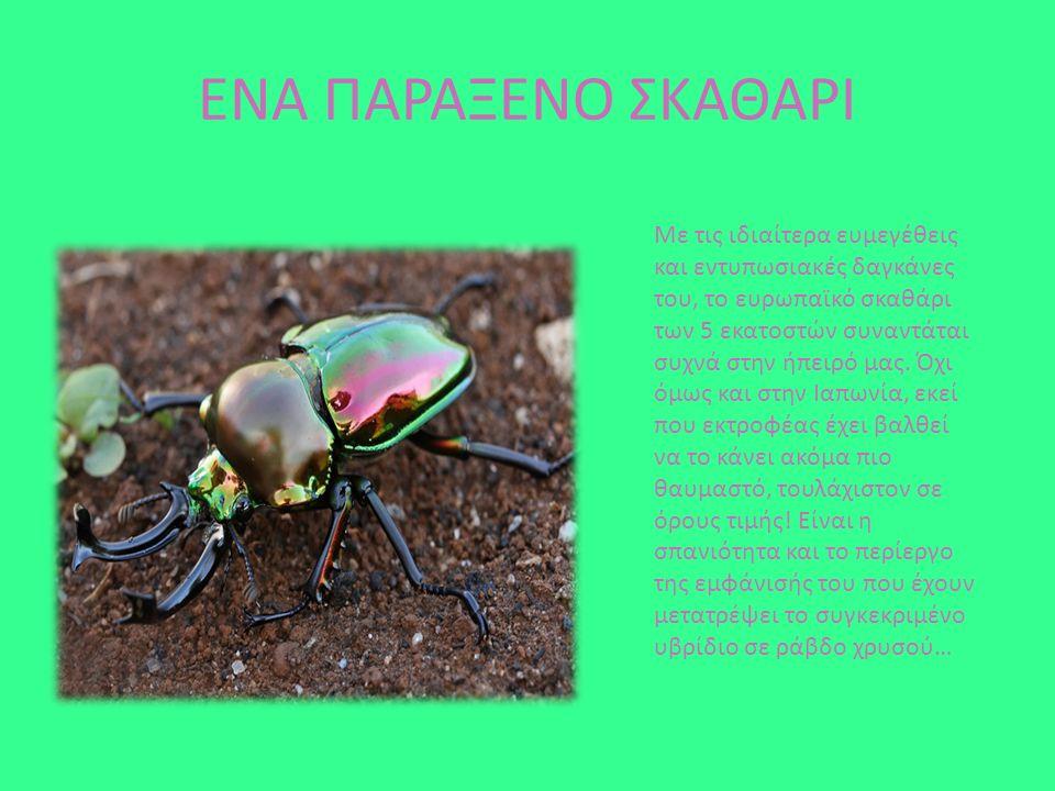 Το Οκάπι είναι αρτιοδάκτυλο θηλαστικό τη ς οικογενείας των Καμηλοπαρδαλιδών, που απαντά αποκλειστικά στα δάση βροχής (rain forests) της Λαϊκής Δημοκρατίας του Κονγκό.
