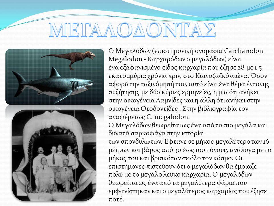 Ο Μεγαλόδων (επιστημονική ονομασία Carcharodon Megalodon - Καρχαρόδων ο μεγαλόδων) είναι ένα εξαφανισμένο είδος καρχαρία που έζησε 28 με 1,5 εκατομμύρια χρόνια πριν, στο Καινοζωϊκό αιώνα.