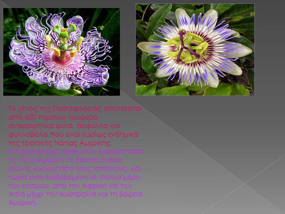 Το γένος της Πασσιφλόρας αποτελείται από 600 περίπου τρυφερά αναρριχητικά φυτά, αείφυλλα και φυλλοβόλα που είναι κυρίως ενδημικά της τροπικής Νότιας Αμερικής.