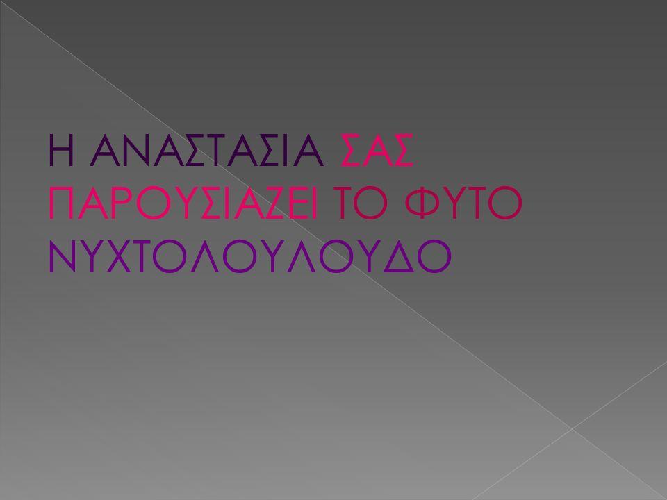 Η ΑΝΑΣΤΑΣΙΑ ΣΑΣ ΠΑΡΟΥΣΙΑΖΕΙ ΤΟ ΦΥΤΟ ΝΥΧΤΟΛΟΥΛΟΥΔΟ