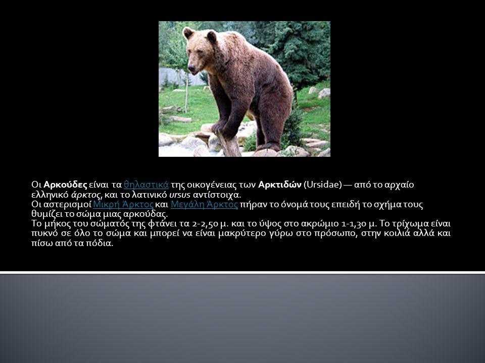 Οι Αρκούδες είναι τα θηλαστικά της οικογένειας των Αρκτιδών (Ursidae) — από το αρχαίο ελληνικό άρκτος, και το λατινικό ursus αντίστοιχα.θηλαστικά Οι αστερισμοί Μικρή Άρκτος και Μεγάλη Άρκτος πήραν το όνομά τους επειδή το σχήμα τους θυμίζει το σώμα μιας αρκούδας.Μικρή ΆρκτοςΜεγάλη Άρκτος Το μήκος του σώματός της φτάνει τα 2-2,50 μ.