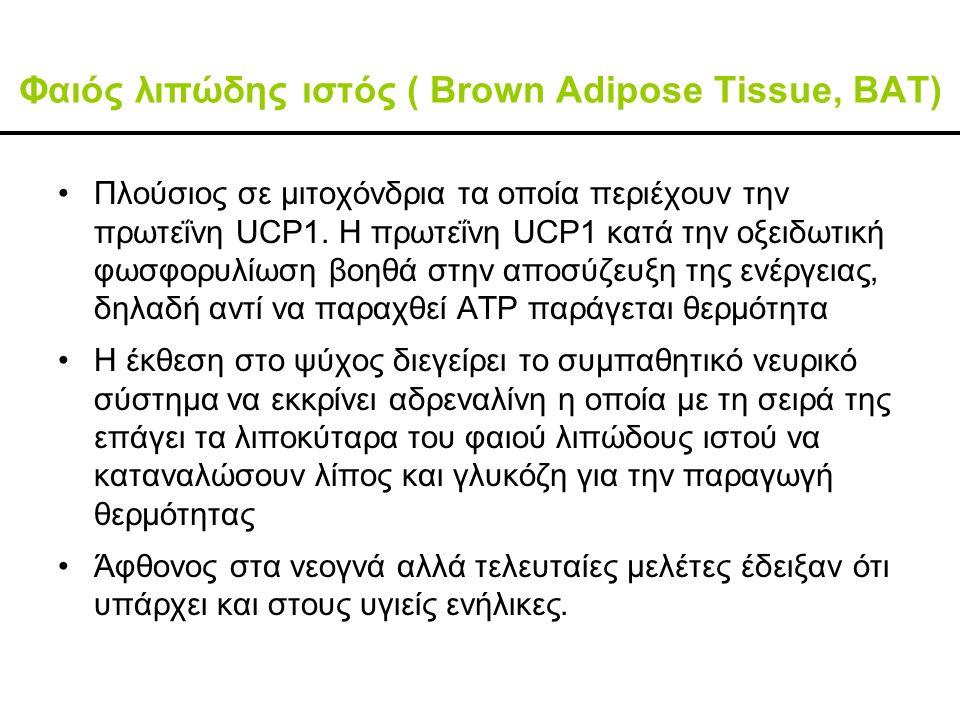 Φαιός λιπώδης ιστός ( Brown Adipose Tissue, BAT) Πλούσιος σε μιτοχόνδρια τα οποία περιέχουν την πρωτεΐνη UCP1.
