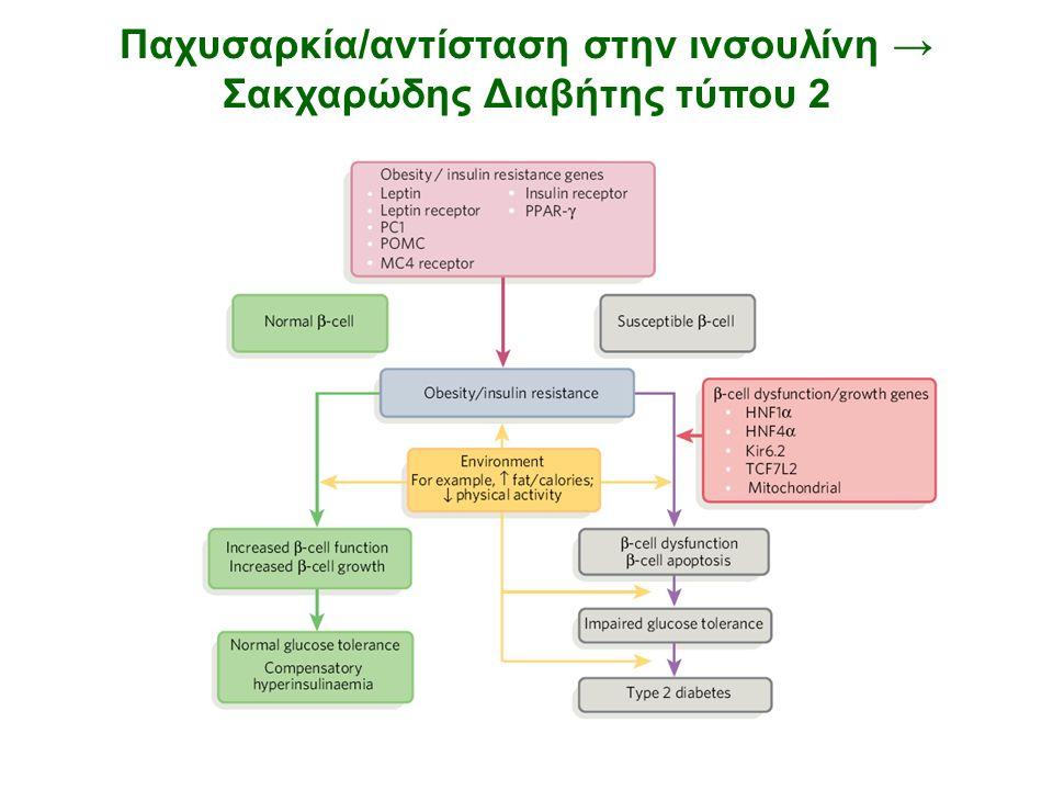 Παχυσαρκία/αντίσταση στην ινσουλίνη → Σακχαρώδης Διαβήτης τύπου 2