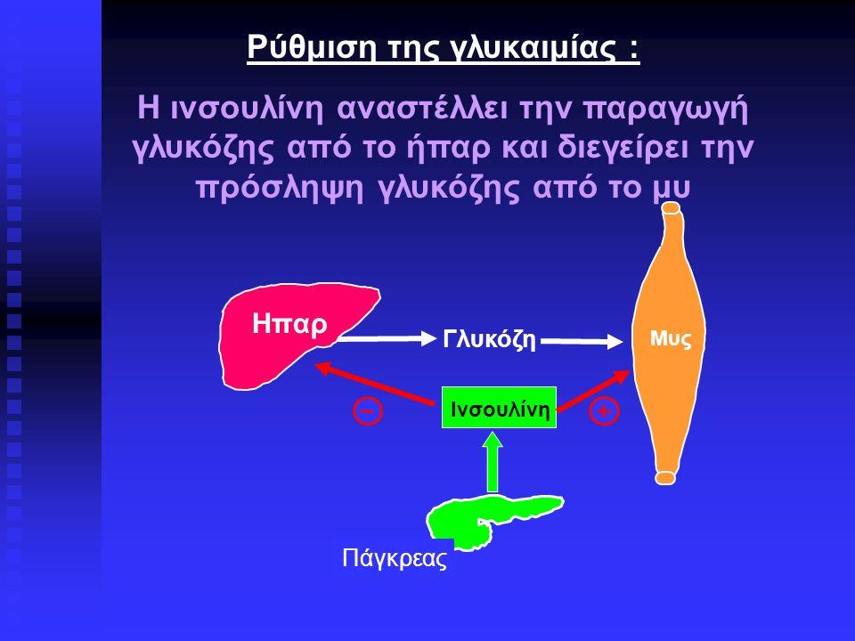 Μυς Ηπαρ Πάγκρεας Γλυκόζη Ινσουλίνη Ρύθμιση της γλυκαιμίας : Η ινσουλίνη αναστέλλει την παραγωγή γλυκόζης από το ήπαρ και διεγείρει την πρόσληψη γλυκόζης από το μυ