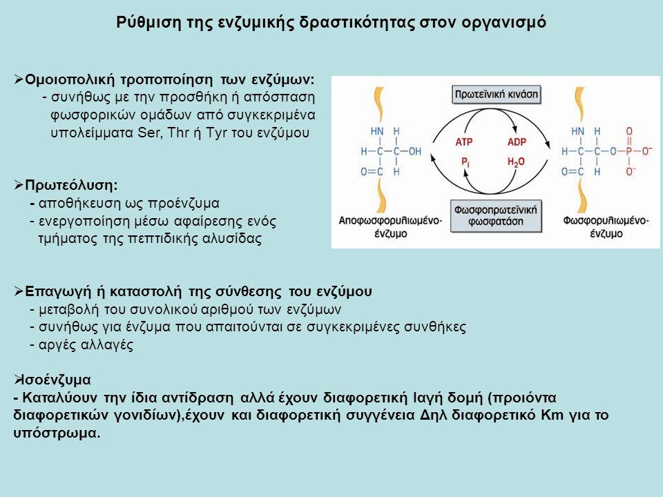 Ρύθμιση της ενζυμικής δραστικότητας στον οργανισμό  Ομοιοπολική τροποποίηση των ενζύμων: - συνήθως με την προσθήκη ή απόσπαση φωσφορικών ομάδων από συγκεκριμένα υπολείμματα Ser, Thr ή Τyr του ενζύμου  Πρωτεόλυση: - αποθήκευση ως προένζυμα - ενεργοποίηση μέσω αφαίρεσης ενός τμήματος της πεπτιδικής αλυσίδας  Επαγωγή ή καταστολή της σύνθεσης του ενζύμου - μεταβολή του συνολικού αριθμού των ενζύμων - συνήθως για ένζυμα που απαιτούνται σε συγκεκριμένες συνθήκες - αργές αλλαγές  Ισοένζυμα - Καταλύουν την ίδια αντίδραση αλλά έχουν διαφορετική Ιαγή δομή (προιόντα διαφορετικών γονιδίων),έχουν και διαφορετική συγγένεια Δηλ διαφορετικό Κm για το υπόστρωμα.