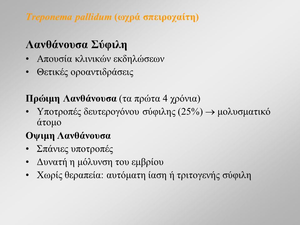 Treponema pallidum (ωχρά σπειροχαίτη) Λανθάνουσα Σύφιλη Απουσία κλινικών εκδηλώσεων Θετικές οροαντιδράσεις Πρώιμη Λανθάνουσα (τα πρώτα 4 χρόνια) Υποτροπές δευτερογόνου σύφιλης (25%)  μολυσματικό άτομο Οψιμη Λανθάνουσα Σπάνιες υποτροπές Δυνατή η μόλυνση του εμβρίου Χωρίς θεραπεία: αυτόματη ίαση ή τριτογενής σύφιλη