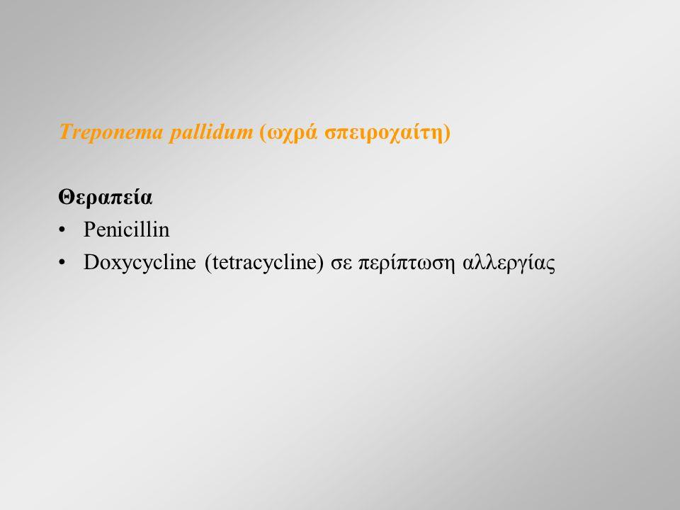 Treponema pallidum (ωχρά σπειροχαίτη) Θεραπεία Penicillin Doxycycline (tetracycline) σε περίπτωση αλλεργίας