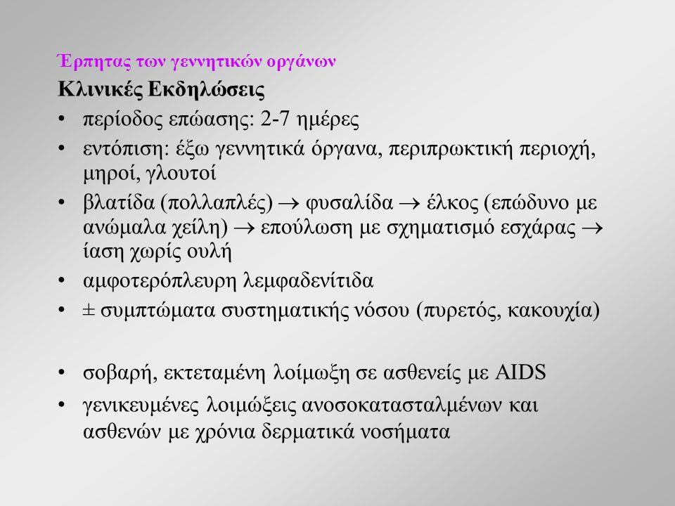 Έρπητας των γεννητικών οργάνων Κλινικές Εκδηλώσεις περίοδος επώασης: 2-7 ημέρες εντόπιση: έξω γεννητικά όργανα, περιπρωκτική περιοχή, μηροί, γλουτοί βλατίδα (πολλαπλές)  φυσαλίδα  έλκος (επώδυνο με ανώμαλα χείλη)  επούλωση με σχηματισμό εσχάρας  ίαση χωρίς ουλή αμφοτερόπλευρη λεμφαδενίτιδα ± συμπτώματα συστηματικής νόσου (πυρετός, κακουχία) σοβαρή, εκτεταμένη λοίμωξη σε ασθενείς με AIDS γενικευμένες λοιμώξεις ανοσοκατασταλμένων και ασθενών με χρόνια δερματικά νοσήματα
