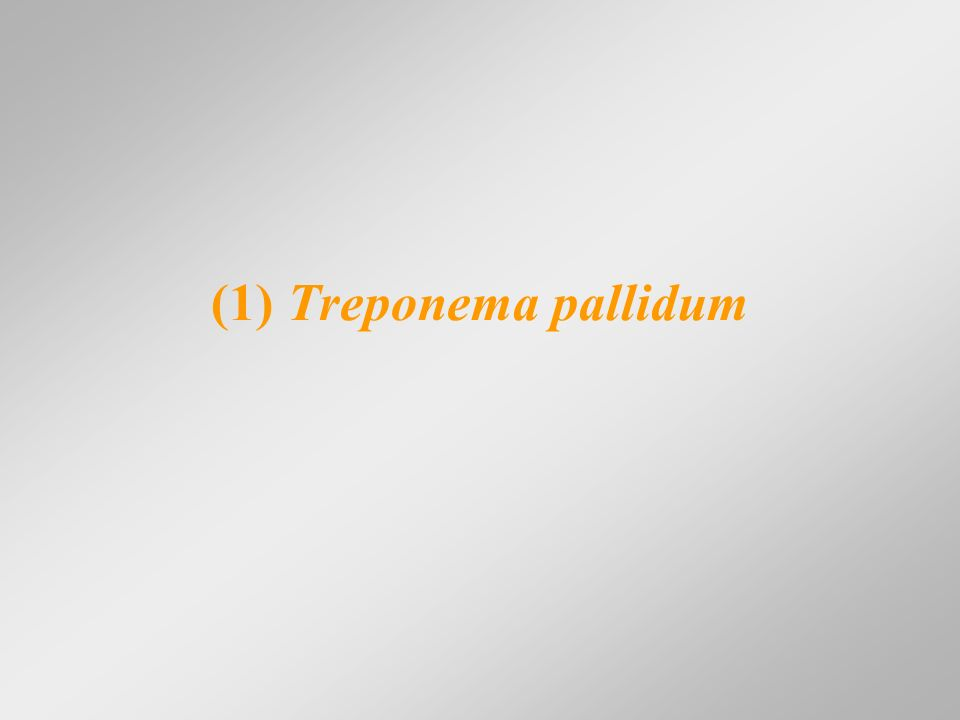 (1) Treponema pallidum