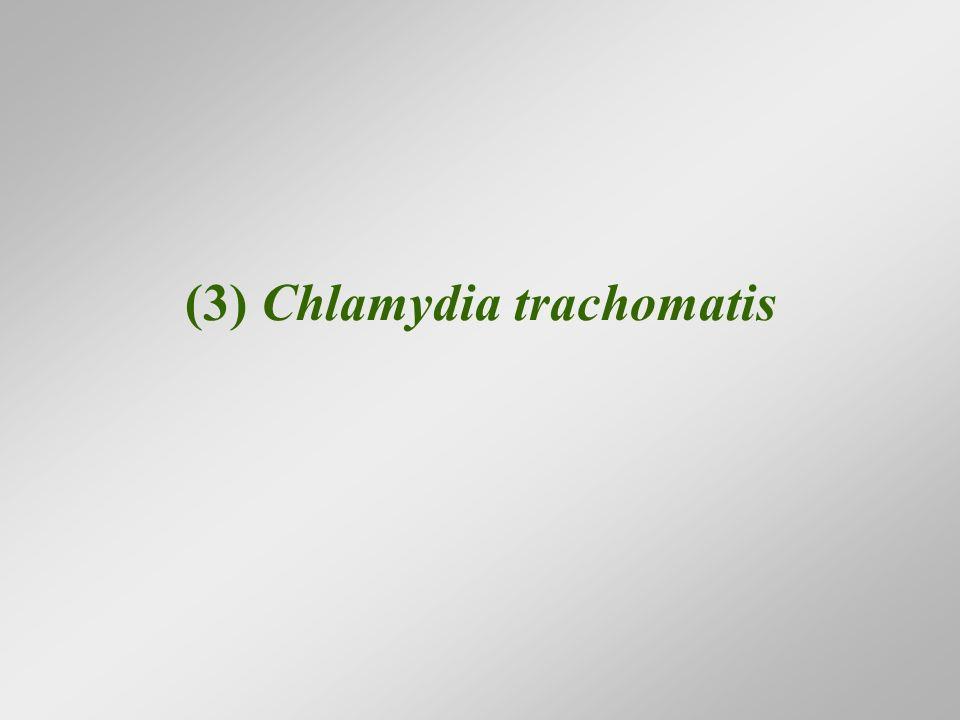 (3) Chlamydia trachomatis