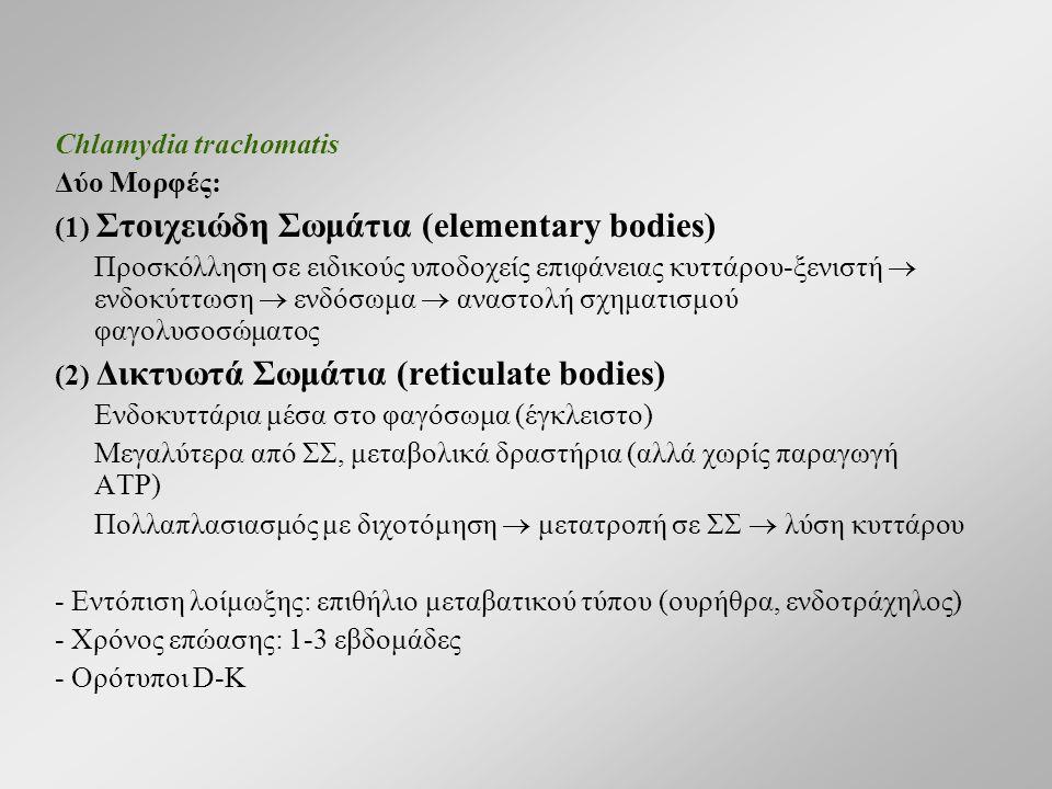 Chlamydia trachomatis Δύο Μορφές: (1) Στοιχειώδη Σωμάτια (elementary bodies) Προσκόλληση σε ειδικούς υποδοχείς επιφάνειας κυττάρου-ξενιστή  ενδοκύττωση  ενδόσωμα  αναστολή σχηματισμού φαγολυσοσώματος (2) Δικτυωτά Σωμάτια (reticulate bodies) Ενδοκυττάρια μέσα στο φαγόσωμα (έγκλειστο) Μεγαλύτερα από ΣΣ, μεταβολικά δραστήρια (αλλά χωρίς παραγωγή ATP) Πολλαπλασιασμός με διχοτόμηση  μετατροπή σε ΣΣ  λύση κυττάρου - Εντόπιση λοίμωξης: επιθήλιο μεταβατικού τύπου (ουρήθρα, ενδοτράχηλος) - Χρόνος επώασης: 1-3 εβδομάδες - Ορότυποι D-K