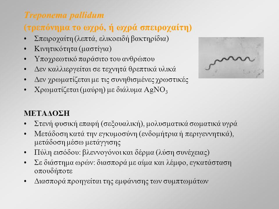 Treponema pallidum (τρεπόνημα το ωχρό, ή ωχρά σπειροχαίτη) Σπειροχαίτη (λεπτά, ελικοειδή βακτηρίδια) Κινητικότητα (μαστίγια) Υποχρεωτικό παράσιτο του ανθρώπου Δεν καλλιεργείται σε τεχνητά θρεπτικά υλικά Δεν χρωματίζεται με τις συνηθισμένες χρωστικές Χρωματίζεται (μαύρη) με διάλυμα AgNO 3 ΜΕΤΑΔΟΣΗ Στενή φυσική επαφή (σεξουαλική), μολυσματικά σωματικά υγρά Μετάδοση κατά την εγκυμοσύνη (ενδομήτρια ή περιγεννητικά), μετάδοση μέσω μετάγγισης Πύλη εισόδου: βλεννογόνοι και δέρμα (λύση συνέχειας) Σε διάστημα ωρών: διασπορά με αίμα και λέμφο, εγκατάσταση οπουδήποτε Διασπορά προηγείται της εμφάνισης των συμπτωμάτων