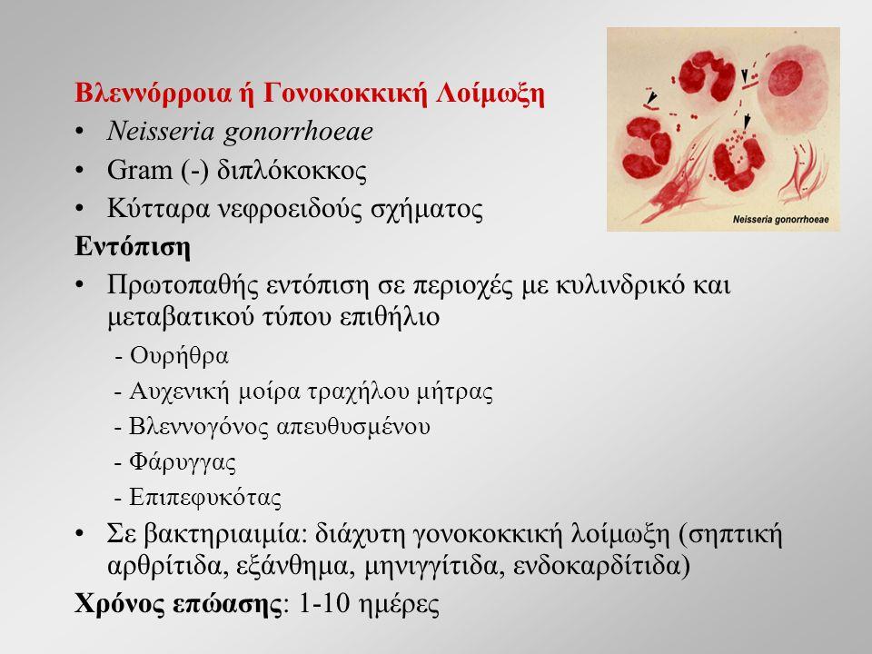 Βλεννόρροια ή Γονοκοκκική Λοίμωξη Neisseria gonorrhoeae Gram (-) διπλόκοκκος Κύτταρα νεφροειδούς σχήματος Eντόπιση Πρωτοπαθής εντόπιση σε περιοχές με κυλινδρικό και μεταβατικού τύπου επιθήλιο - Ουρήθρα - Αυχενική μοίρα τραχήλου μήτρας - Βλεννογόνος απευθυσμένου - Φάρυγγας - Eπιπεφυκότας Σε βακτηριαιμία: διάχυτη γονοκοκκική λοίμωξη (σηπτική αρθρίτιδα, εξάνθημα, μηνιγγίτιδα, ενδοκαρδίτιδα) Χρόνος επώασης: 1-10 ημέρες