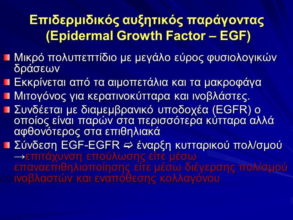 Επιδερμιδικός αυξητικός παράγοντας (Epidermal Growth Factor – EGF) Μικρό πολυπεπτίδιο με μεγάλο εύρος φυσιολογικών δράσεων Εκκρίνεται από τα αιμοπετάλια και τα μακροφάγα Μιτογόνος για κερατινοκύτταρα και ινοβλάστες.