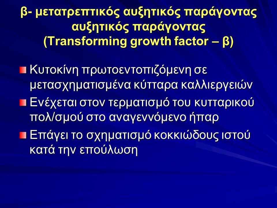 β- μετατρεπτικός αυξητικός παράγοντας αυξητικός παράγοντας (Transforming growth factor – β) Κυτοκίνη πρωτοεντοπιζόμενη σε μετασχηματισμένα κύτταρα καλλιεργειών Ενέχεται στον τερματισμό του κυτταρικού πολ/σμού στο αναγεννόμενο ήπαρ Επάγει το σχηματισμό κοκκιώδους ιστού κατά την επούλωση