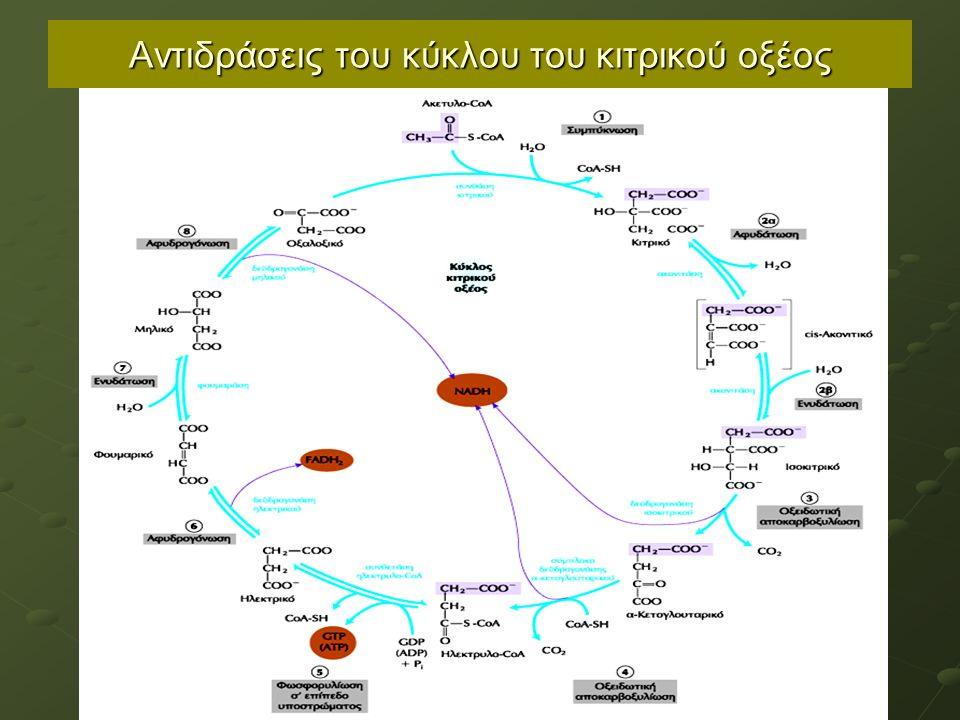 Αντιδράσεις του κύκλου του κιτρικού οξέος