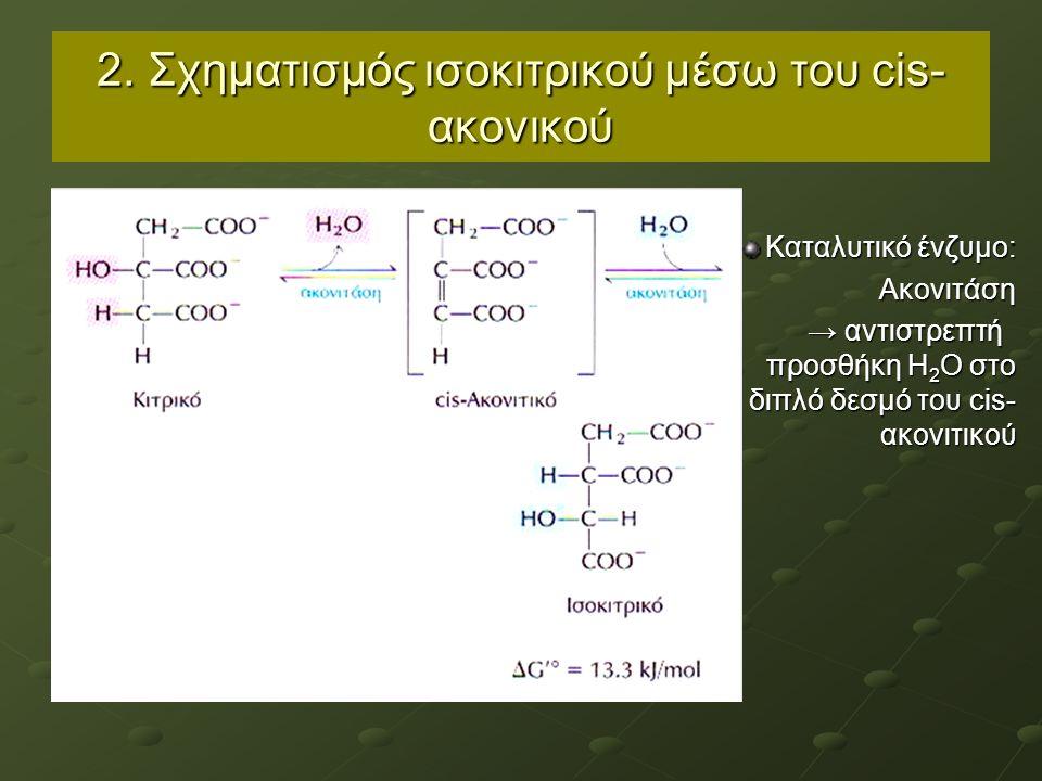 2. Σχηματισμός ισοκιτρικού μέσω του cis- ακονικού Καταλυτικό ένζυμο: Ακονιτάση → αντιστρεπτή προσθήκη Η 2 Ο στο διπλό δεσμό του cis- ακονιτικού