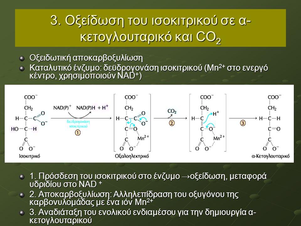 3. Οξείδωση του ισοκιτρικού σε α- κετογλουταρικό και CO 2 Οξειδωτική αποκαρβοξυλίωση Καταλυτικό ένζυμο: δεϋδρογονάση ισοκιτρικού (Μn 2+ στο ενεργό κέν